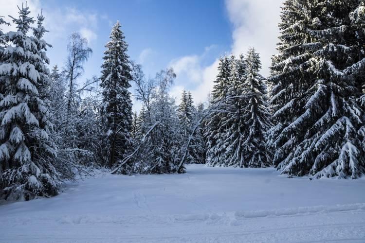 Thüringen: Wintermonate in diesem Jahr um 2,7 Grad zu warm