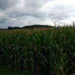 Feld Symbol TNetzbandt thib24.de landwirtschaft