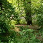 Ilmpark Weimar Park an der Ilm Ansichten Blick auf Goethes Gartenhaus Garten TNetzbandt thib24.de