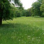 Ilmpark Weimar Park an der Ilm Ansichten TNetzbandt 2 thib24.de