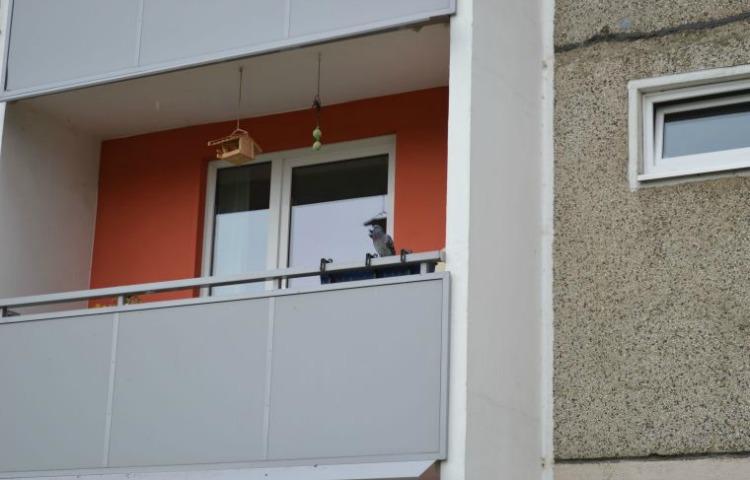 Weimar: Wohnungsmarktkonzept 2019 – 2023 wird erstellt