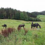 Pferde Koppel Wald SHK TNetzbandt thib24