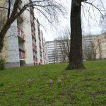 Wohnblock Neubau Lobeda Frühling Symbol TNetzbandt thib24