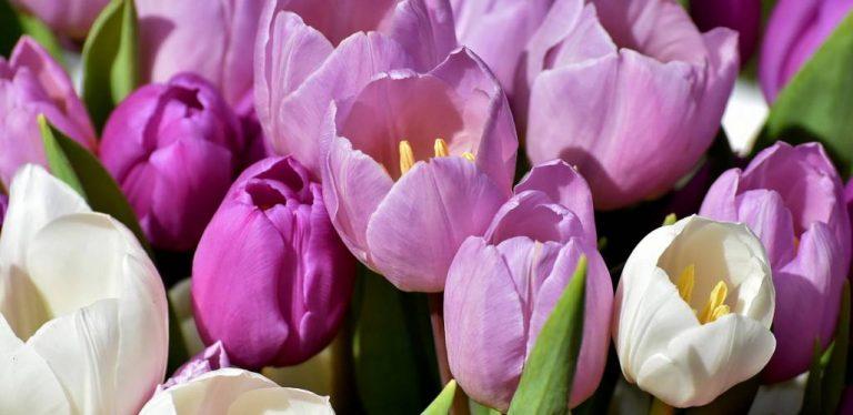 Erfurt: Zoopark bekommt bunte Blumenwiese