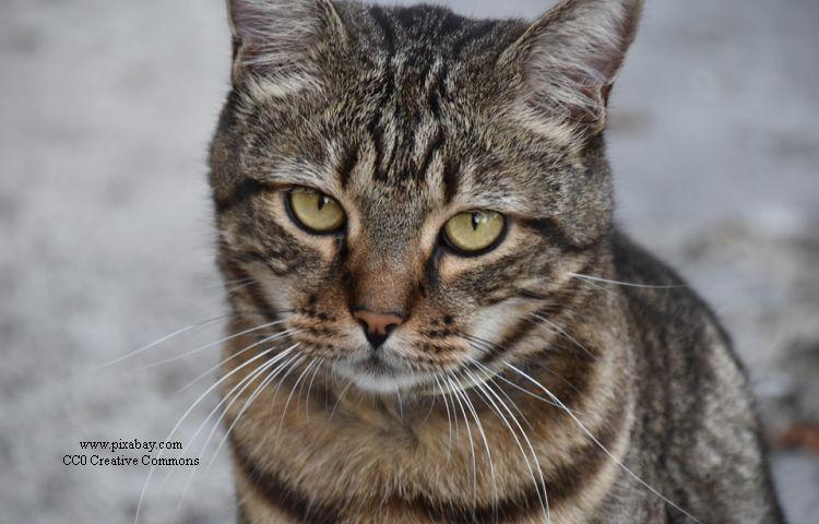 Nordhausen: abgestürzte Katze sorgt für Streit