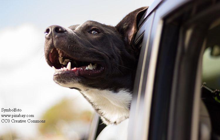 Nordhausen: Hund aus Auto gerettet