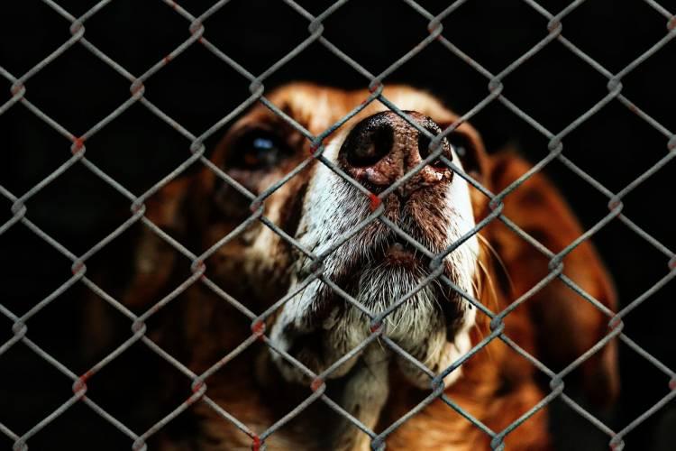 Weimar: Zeugen nach Hunde-Angriff gesucht