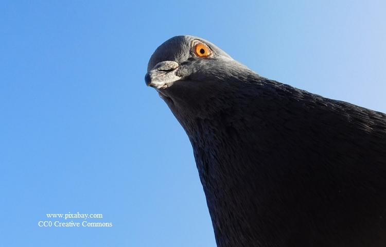 Schleiz: Fünf Tauben im Streichelzoo erschossen
