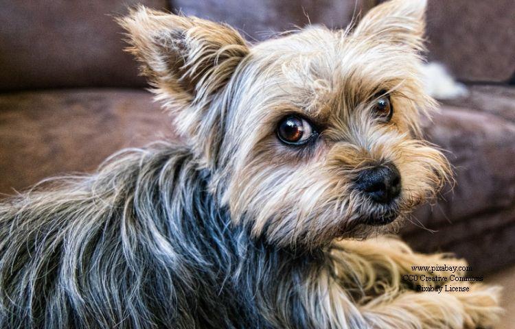 Eisenach: Hausmeister findet ausgesetzte Hundewelpen im Flur