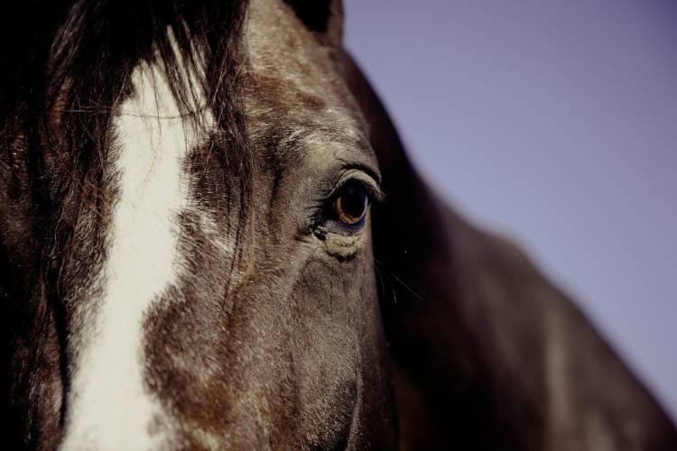 Unterkatz – erneut Pferd auf Koppel angegriffen