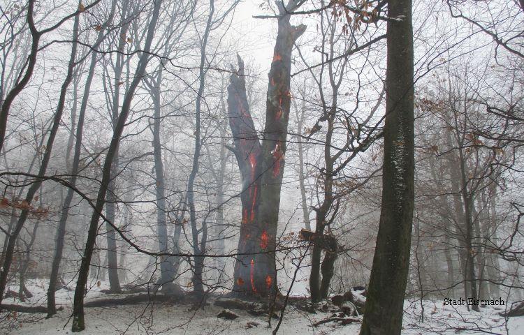 Eisenach: Hohler Baum brannte im Inneren