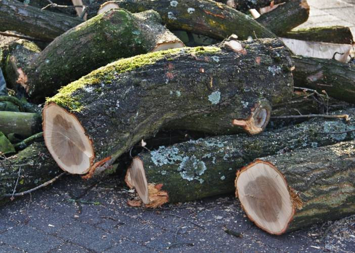 Gera: 16 Bäume müssen in der Friedhofstraße gefällt werden