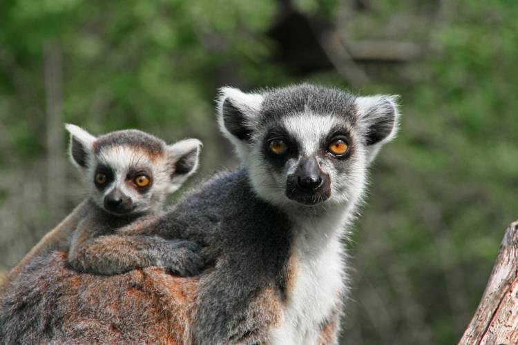 Erfurt: Zoo hat weiterhin geöffnet