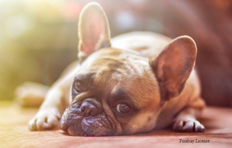 Hundesteuer-Einnahmen stiegen 2020 deutlich an