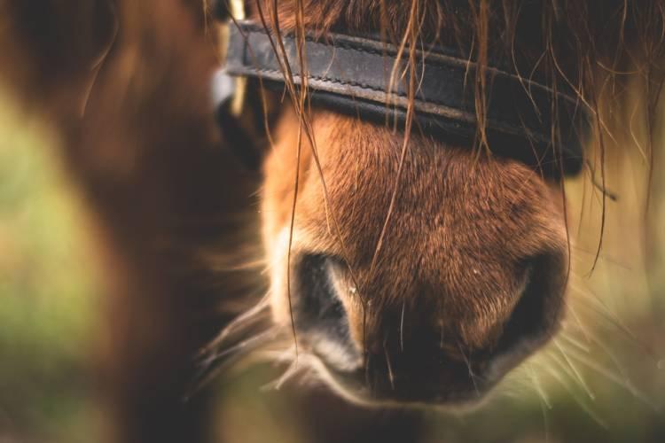 Arnstadt: 3 Ponys auf der Autobahn A4