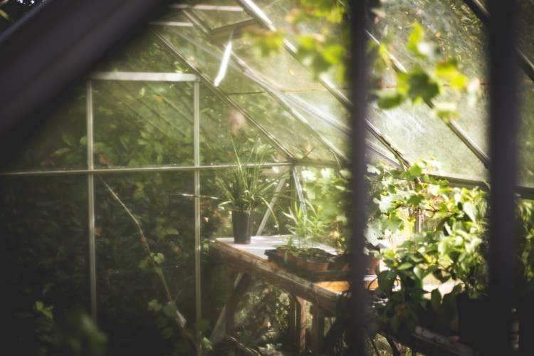 Gera: Gewächshaus im Botanischen Garten durch Sturm zerstört