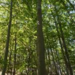 Wald Baum Symbol 2 TNetzbandt thib24.de 750
