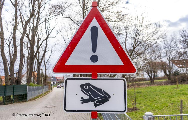 Erfurt: Helfer für Krötenwanderung gesucht