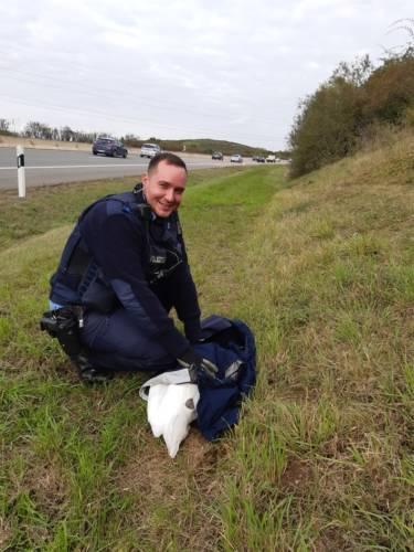 A 71 – Schwan von der Autobahn gerettet