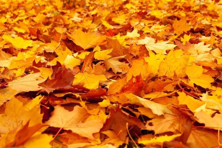 Gera: Programm für die Herbstferien veröffentlicht