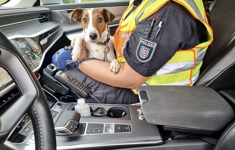 Eisenberg: Terrier Bella auf der Autobahn